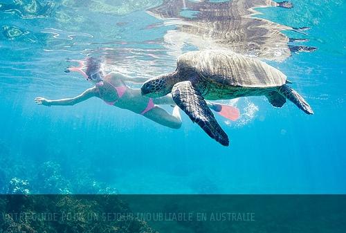 Surf, terres rouges et koalas : envolez-vous pour l'Australie